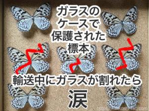 ガラスケースで保護された蝶の標本ケースです。